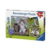 3 x 49 - Tiger Kittens