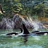 1000 - Orcas