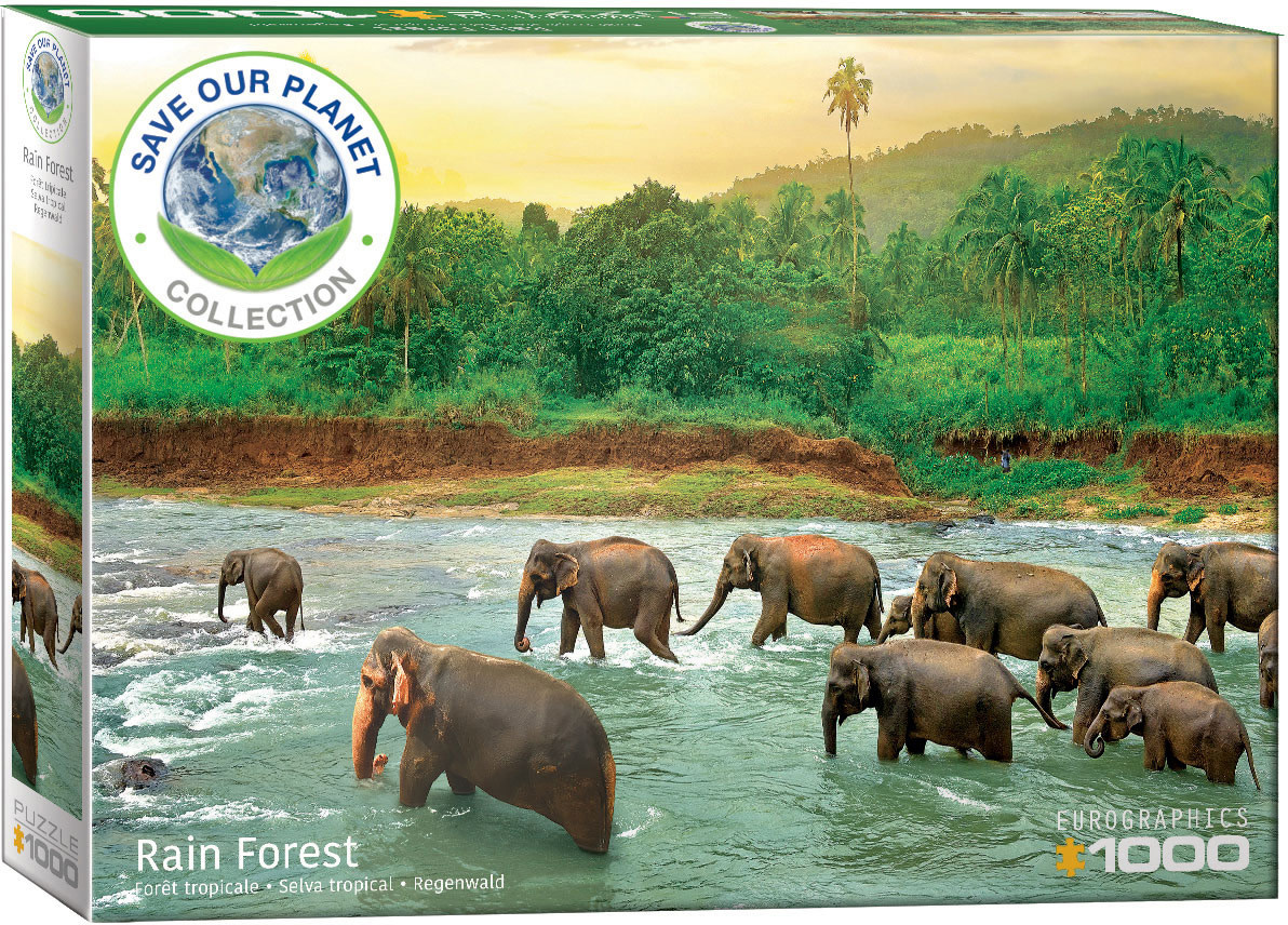 1000 - Rainforest