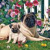 1000 - Pug Family