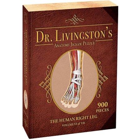 900 - Dr. Livingston's Anatomy Jigsaw Puzzles Volume VI - Human Right Leg