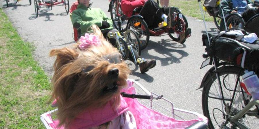 Top 10 Reasons a Recumbent Trike is Great