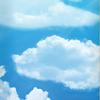 "Real Wair Sky High Deck - 8.25"""