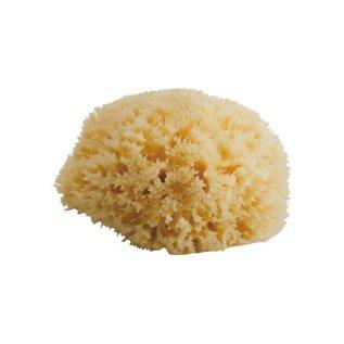 Bellini sea sponge