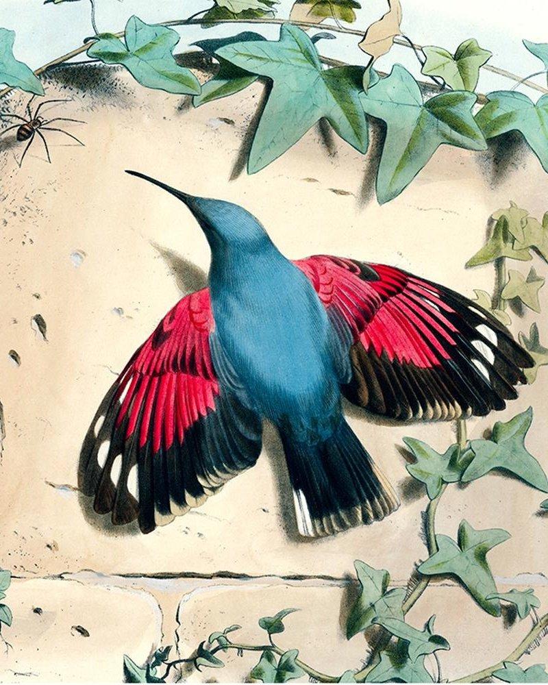 John Derian Scarf JD Hummingbird