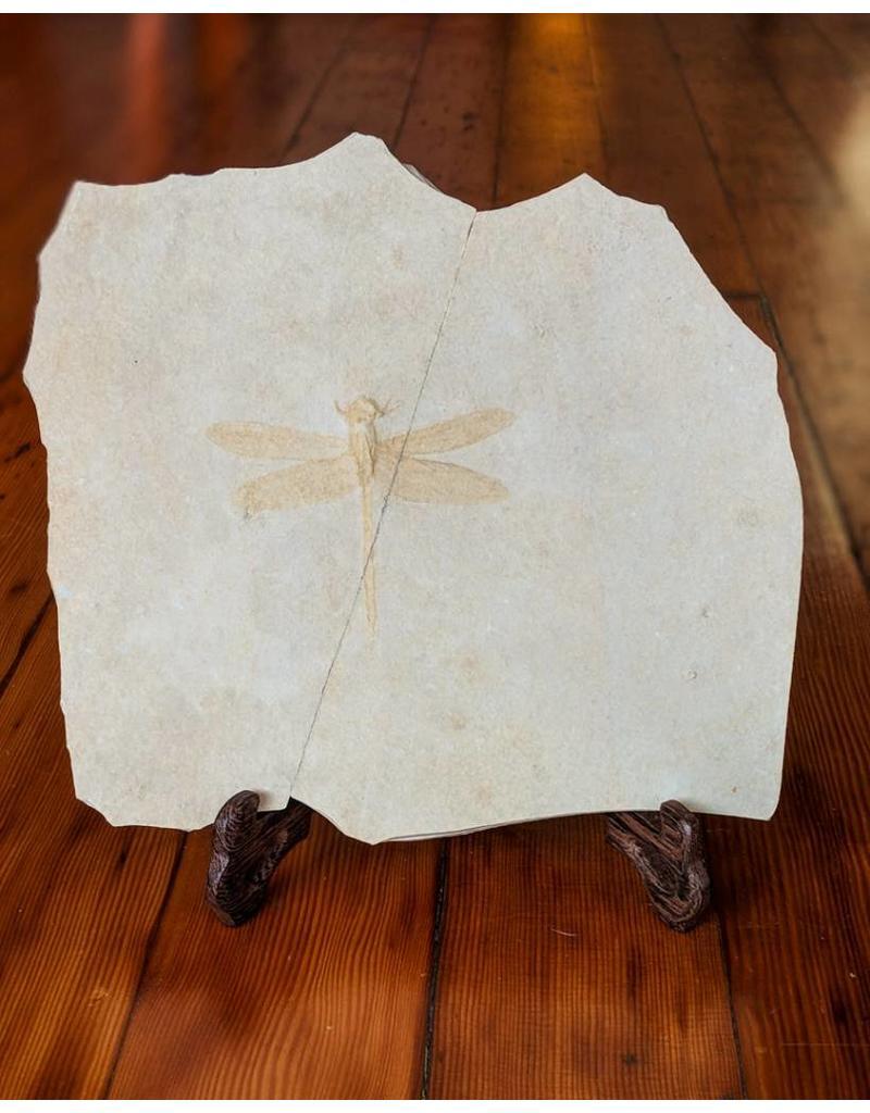 Dragonfly Jurassic Solnhofen Germany