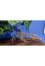 Dimorphodon macronyx Standing Skeleton Replica