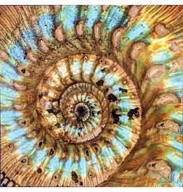 Mike Woodward Photography Ammonite Pyrite Brown 203x203mm