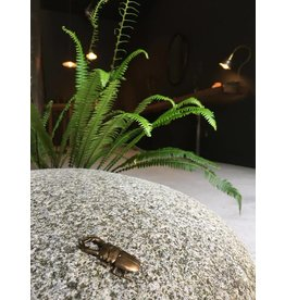 Miki Tanaka Staghorn Beetle Bronze 57mm