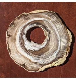Cedar Petrified Wood Slice 220x213x11mm Miocene Oregon