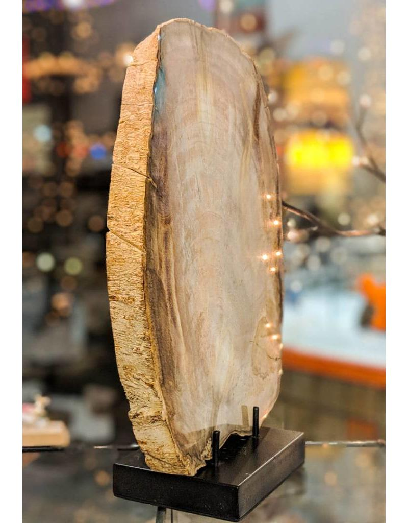 Dicot Petrified Wood Slice 250x190x22mm Eocene Texas