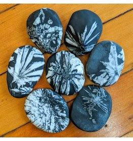 B&R Rock Shop Chrysanthemum Stone Celestine in Shale