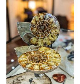 Ammonite Pair 125x100x40mm 760g Madagascar