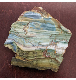 JH Stone Galleria Petrified Swamp Bog 120x110x8mm 183g Oregon Miocene