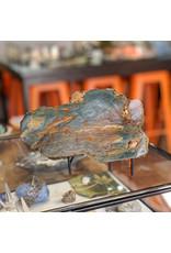 JH Stone Galleria Petrified Swamp Bog End Cut 180x120x34mm 576g Oregon Miocene