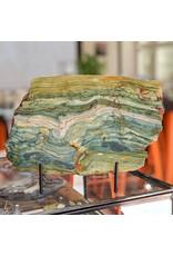 Petrified Swamp Bog 227x157x13mm 974g Oregon Miocene