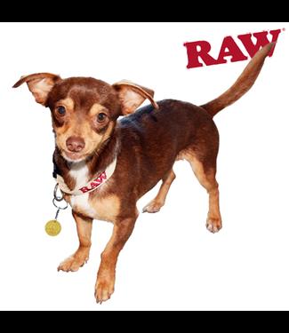RAW RAW Hemp Dog Collar, Small