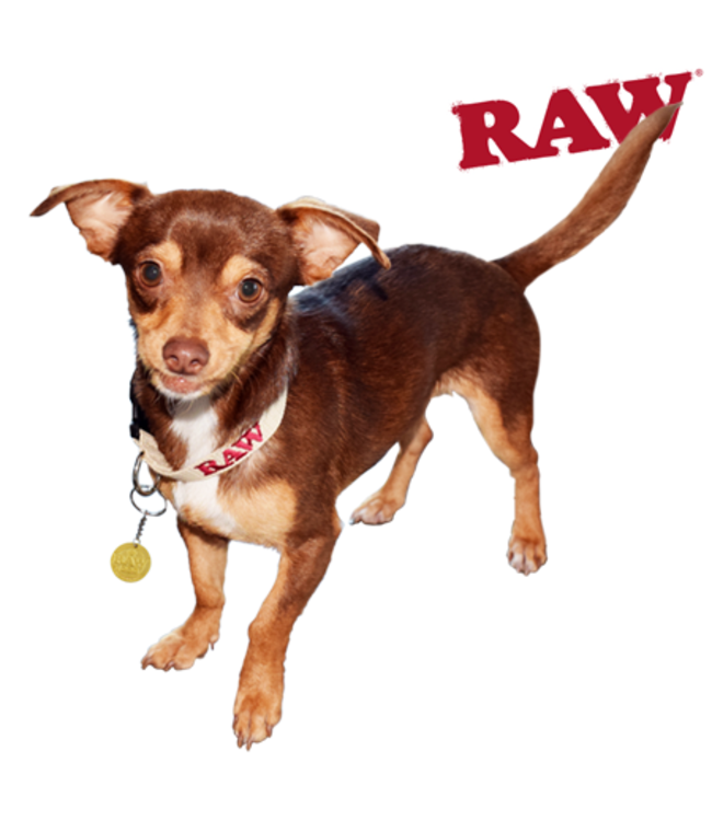 RAW RAW Hemp Dog Collar Small