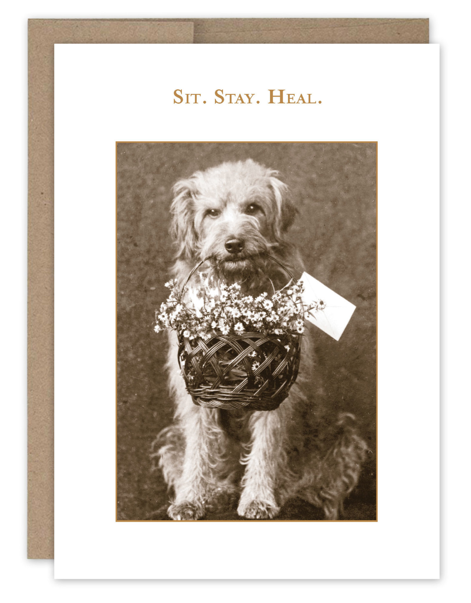 Shannon Martin Design SM338 Sit Stay Heal Card