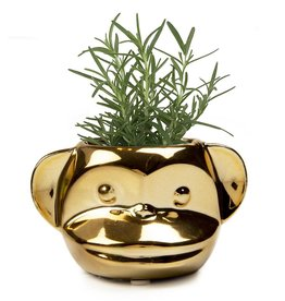 Chive Funky Monkey Planter