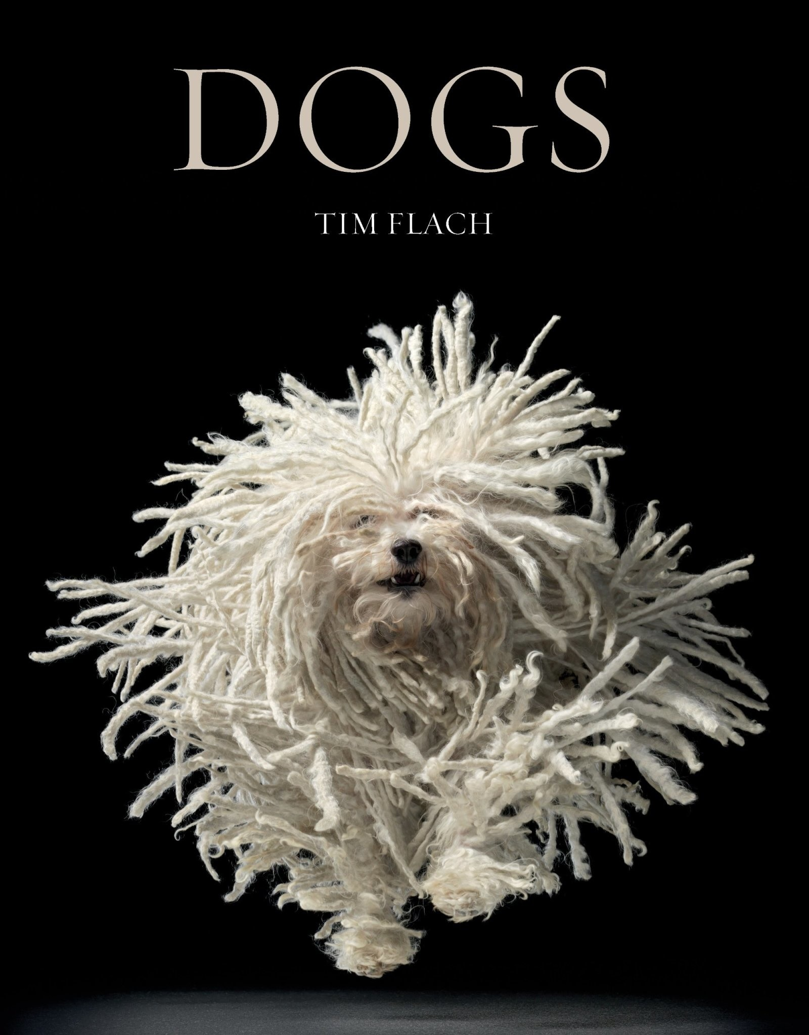 Dogs by Flach