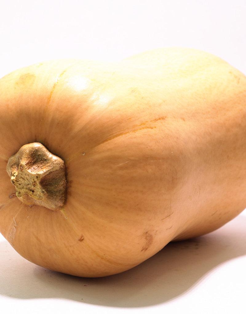 Les Jardins de Stéphanie Courge Butternut (1,36kg)