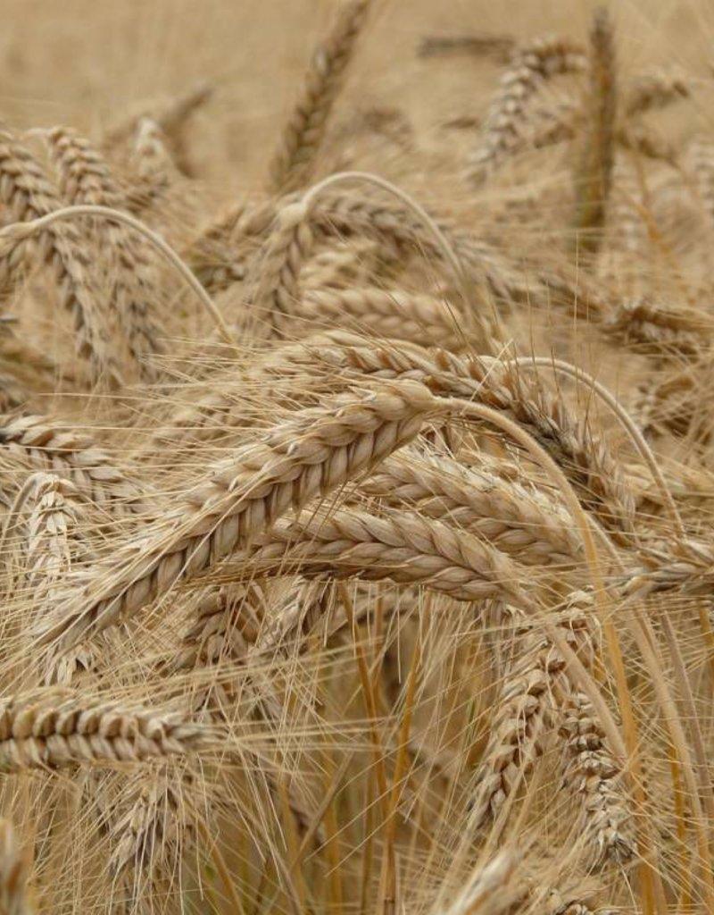 Coop Agrobio du Québec Farine de blé blanche non blanchie tamisée (400gr et 1kg)