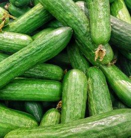 BocoBoco - maître fruitier Concombres libanais biologiques, Jardins de la pinède (lot de 3)