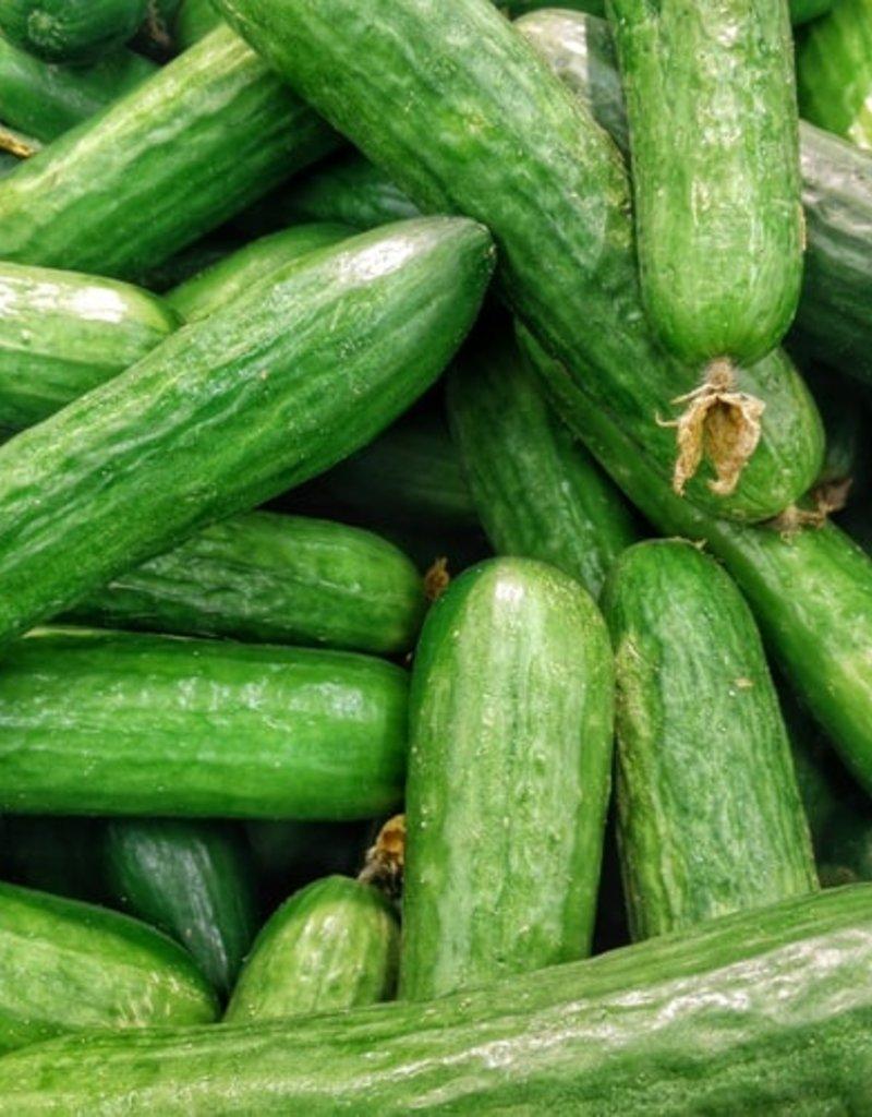 BocoBoco - maître fruitier Concombres libanais biologiques, Jardins de la pinède(lot de 3)