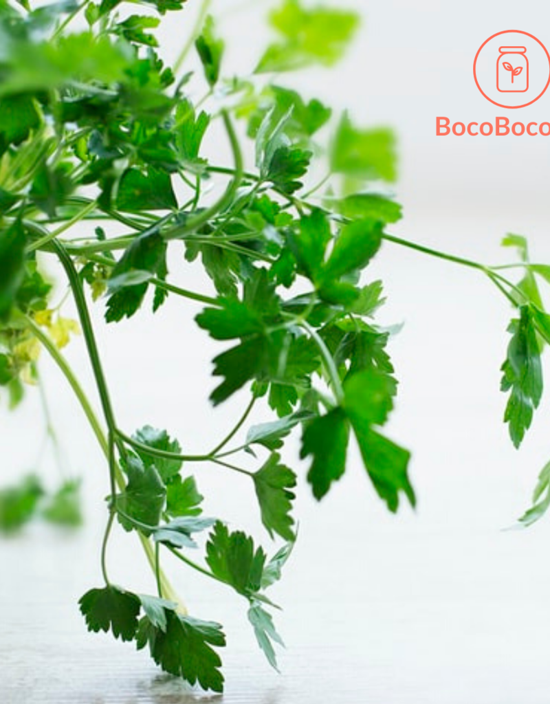 BocoBoco - maître fruitier Persil Italien biologique (botte)