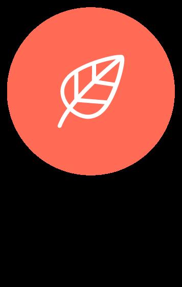 Ingrédients biologiques BocoBoco