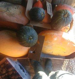 Les Jardins de Stéphanie Courge arikana petite (3 ou 4 lb)