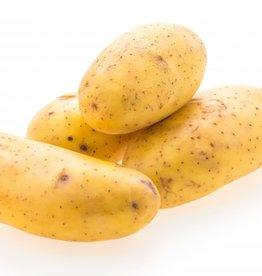 BocoBoco - maître fruitier Patates Russet biologiques du Québec(1,5kg)
