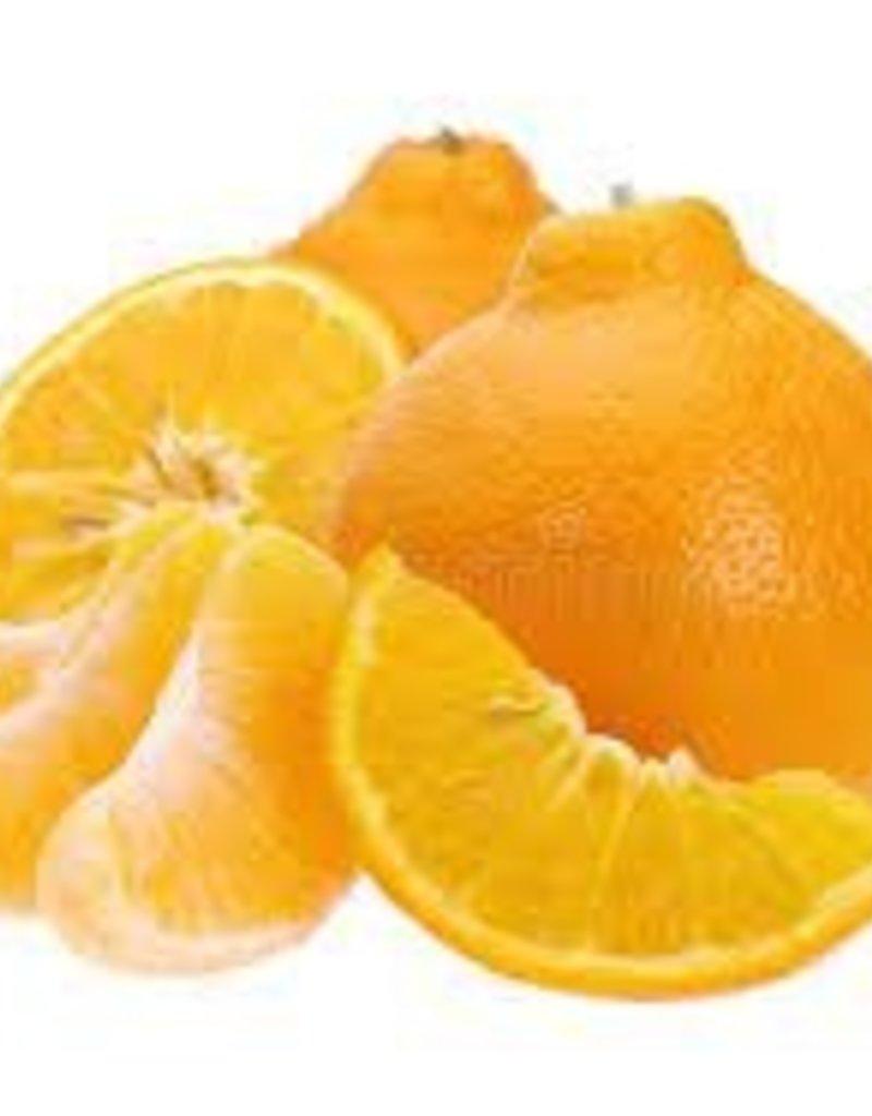 BocoBoco - maître fruitier Tangerines Minneola - Biologiques (lot de 4)