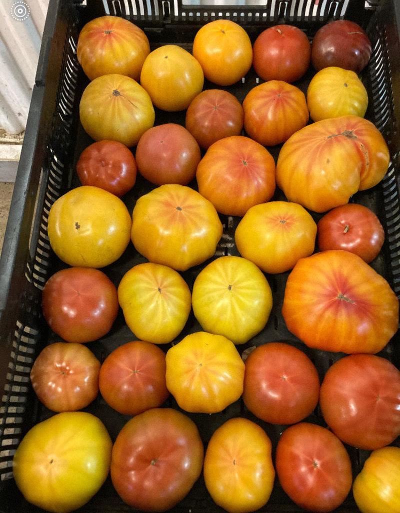 Jardins de la Pinède Tomates coeur de boeuf - biologiques du Québec, Jardins de la pinède  (2 moyennes ou 3 petites)
