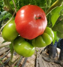 Jardins de la Pinède Tomates coeur de boeuf - biologiques du Québec, Jardins de la pinède  (1lb - environ 2 tomates)