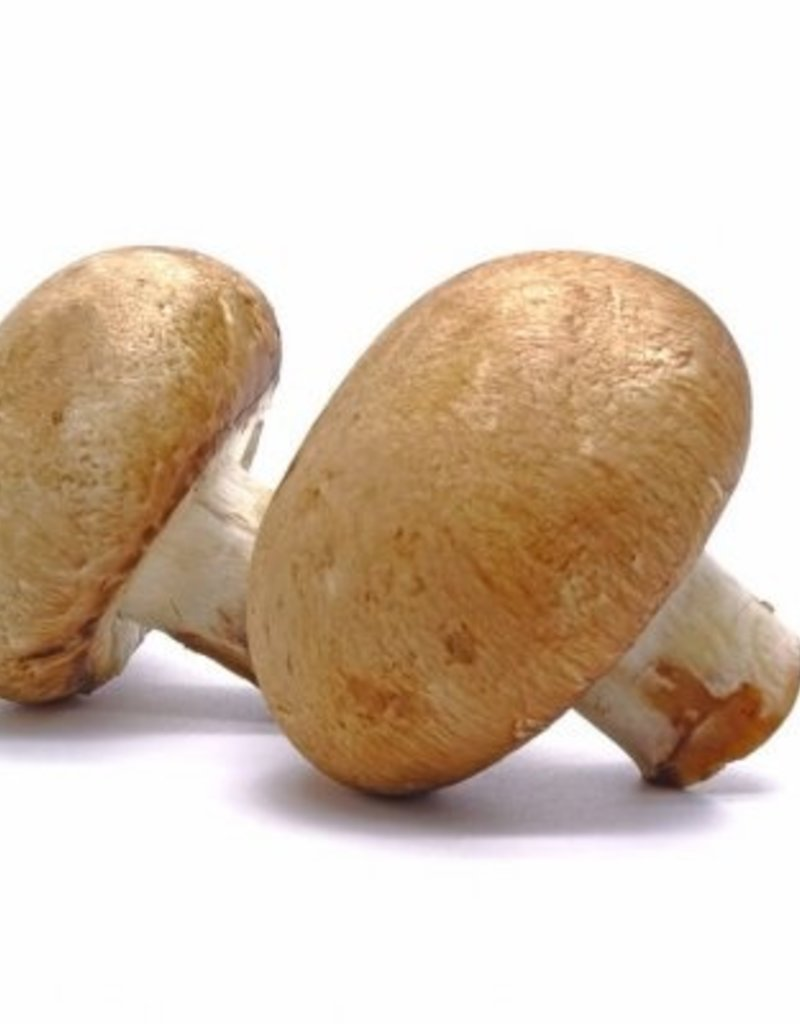 BocoBoco - maître fruitier Champignons blancs ou café, selon arrivage (environ 225 gr)