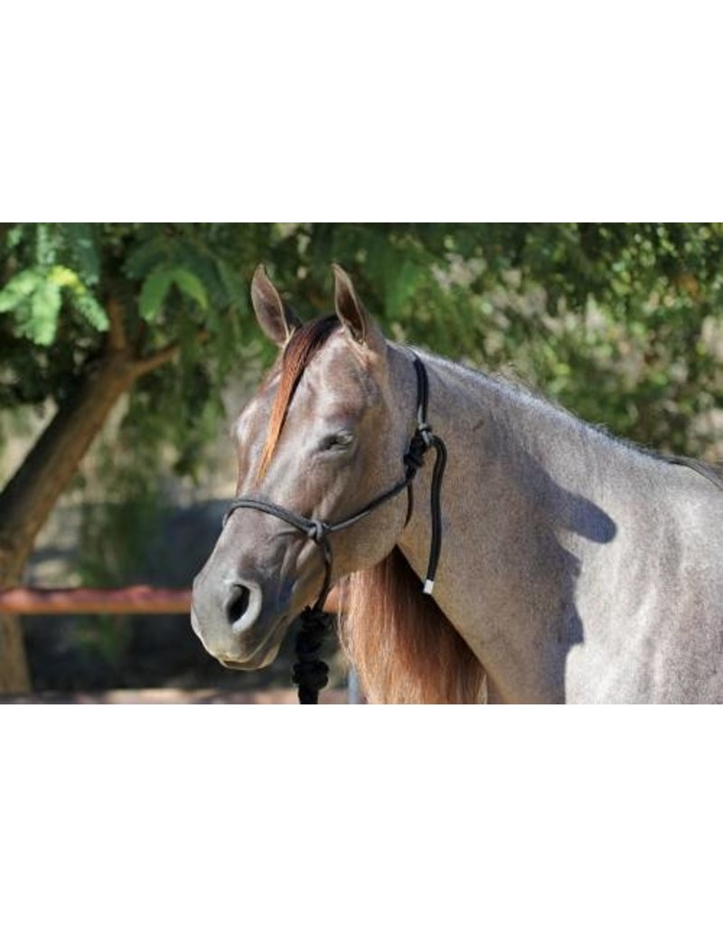 Professionals Choice Rope Halter with 10' Lead