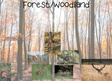 Forest/Woodland