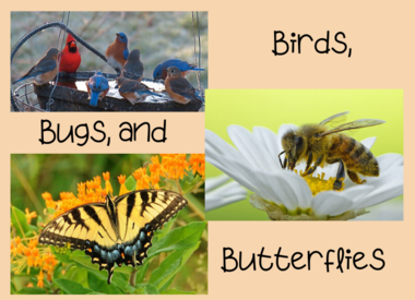 Birds, Bugs & Butterflies