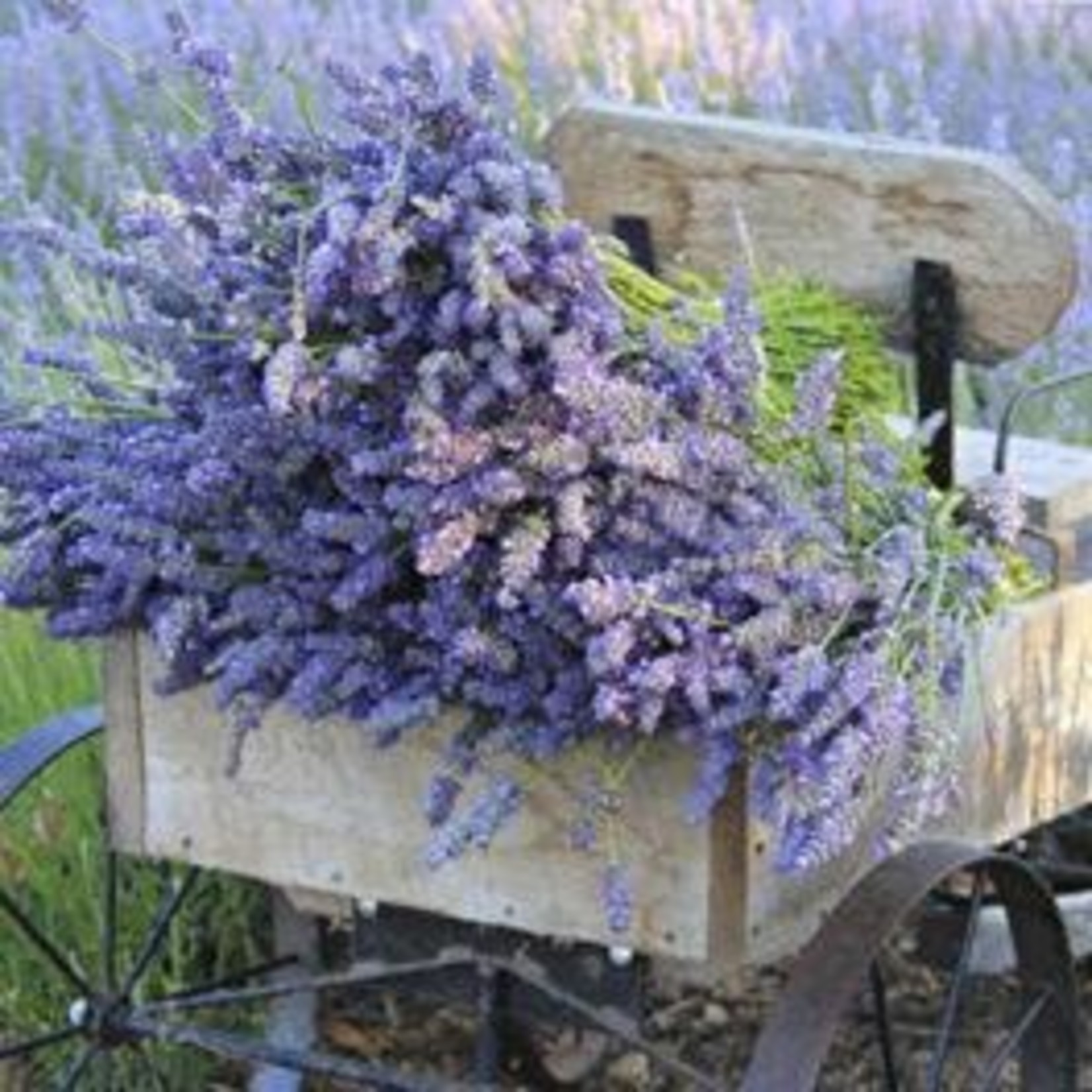 Sonoma Lavender Butterfly Soap