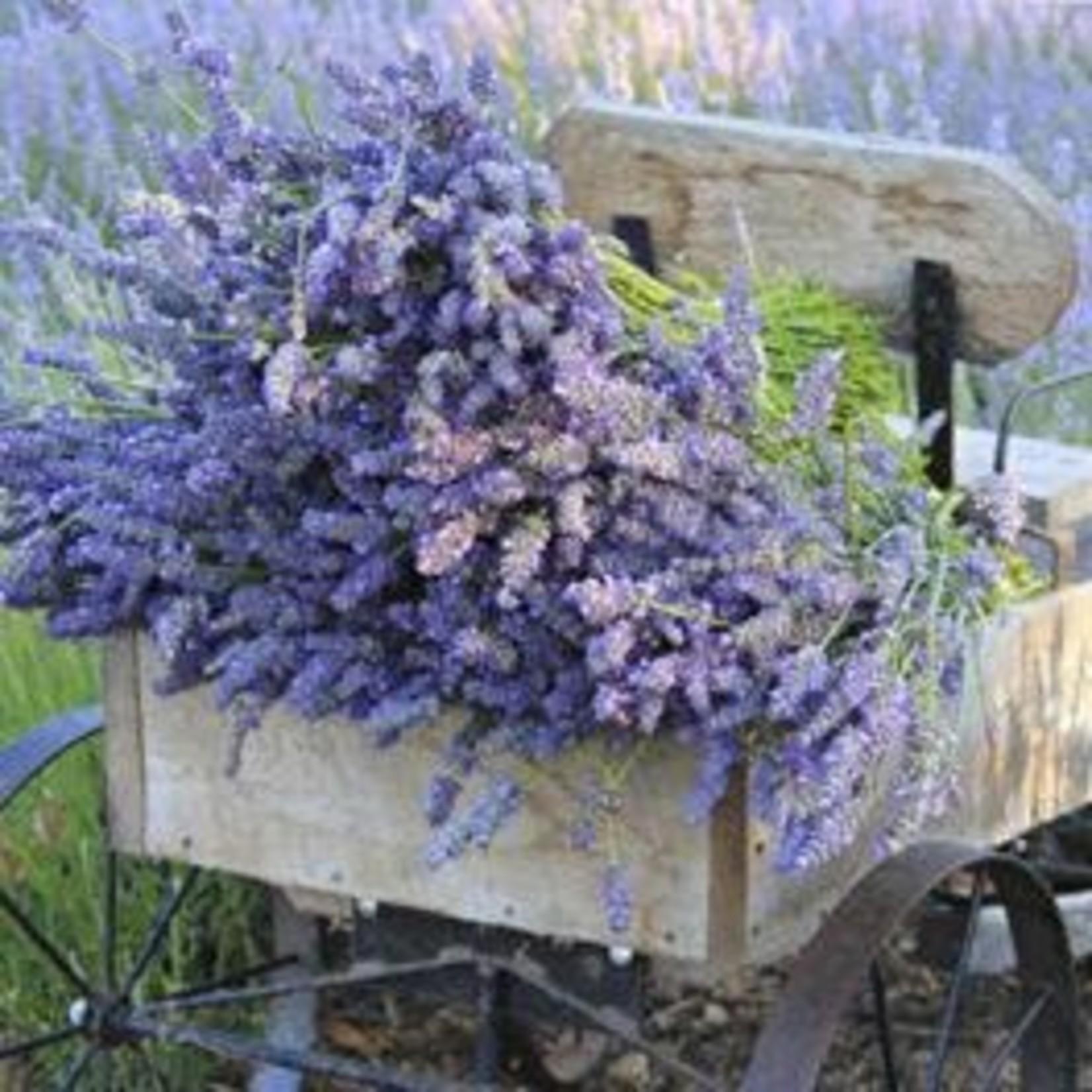Sonoma Lavender Shower Gel