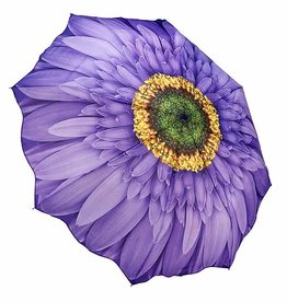 Purple Daisy Folding Umbrella