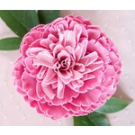 A'marie's Bath Flower Shop Heartfelt Splendor Bathing Petal Soap Flower