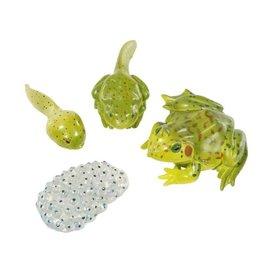 Frog Life Cycle Figurines