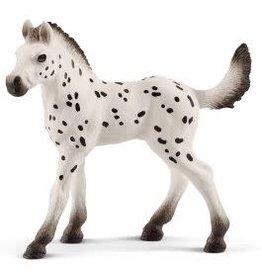 Knapstrupper foal