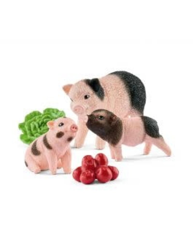 Miniature pig mother and piglets