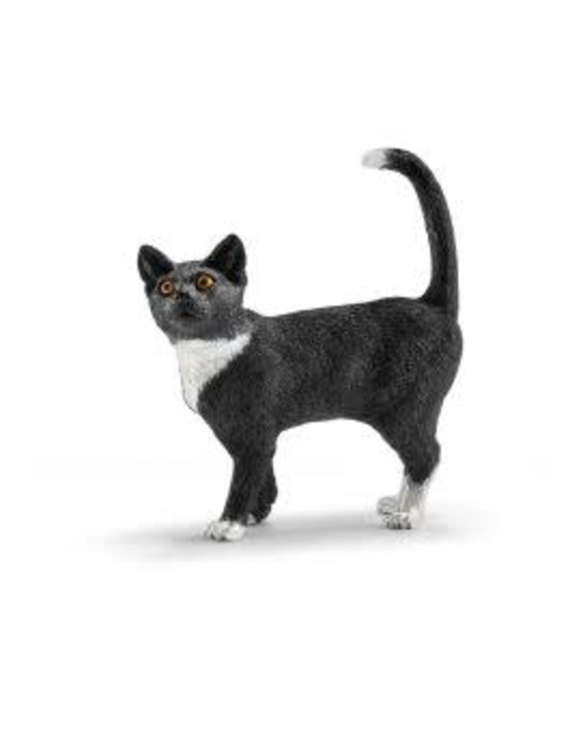 Cat, standing