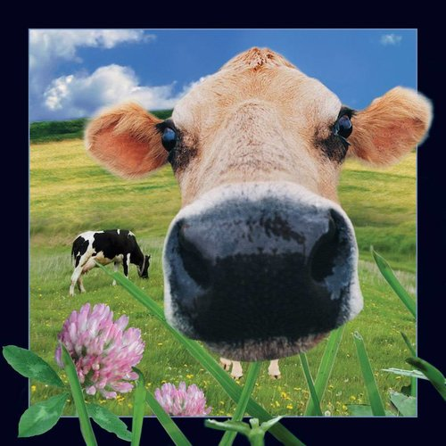 WORTH KEEPING 3D / 4D VIDEO POSTCARD COW