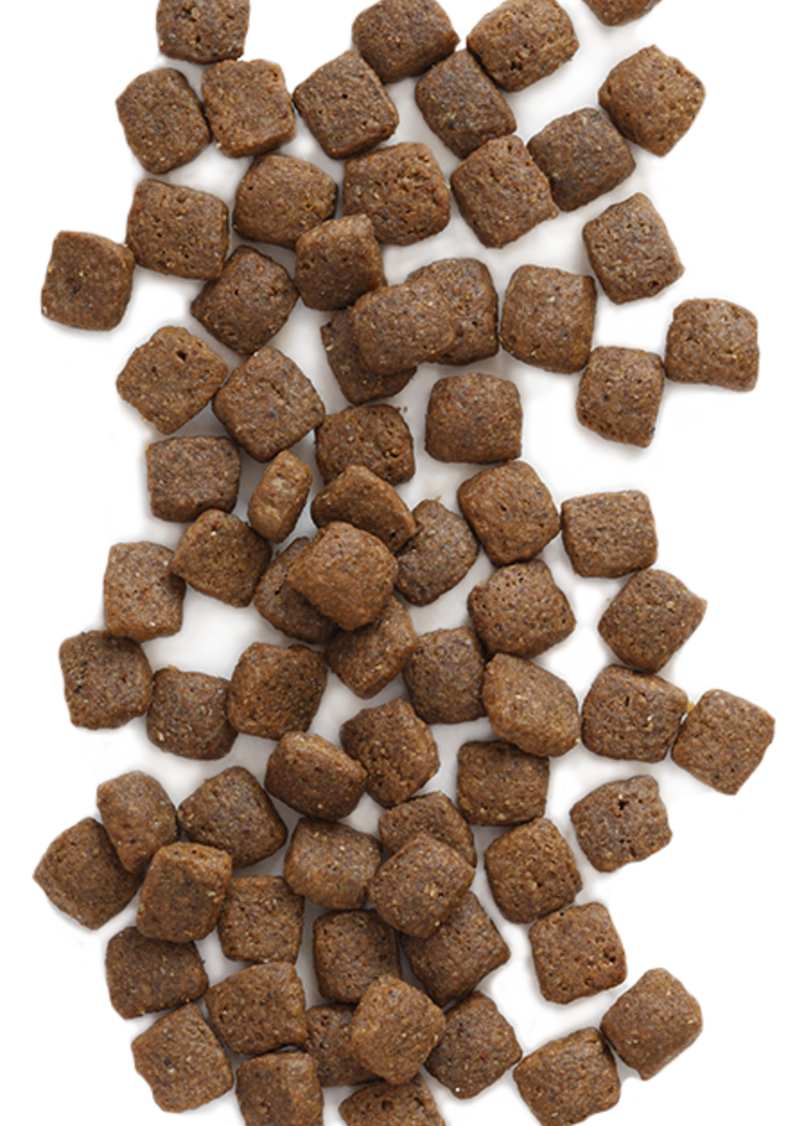 Earthborn by Midwestern Pet Earthborn Dog Dry Holistic Coastal Catch